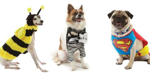 Halloween dog costumes.
