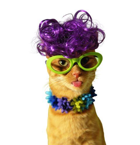 Youtube cat