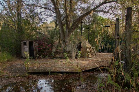 Pond, Wetland, Trunk, Reflection, Bog, Swamp, Bayou,