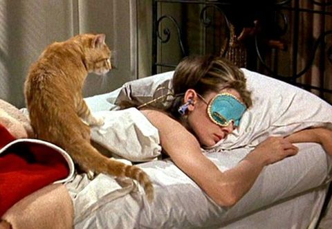 Comfort, Small to medium-sized cats, Felidae, Cat, Carnivore, Whiskers, Fur, Domestic short-haired cat, Medical procedure, Bedding,