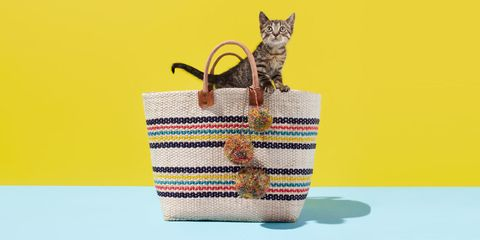 Small to medium-sized cats, Felidae, Whiskers, Carnivore, Cat, Bag, Creative arts, Domestic short-haired cat, Pet supply, Home accessories,