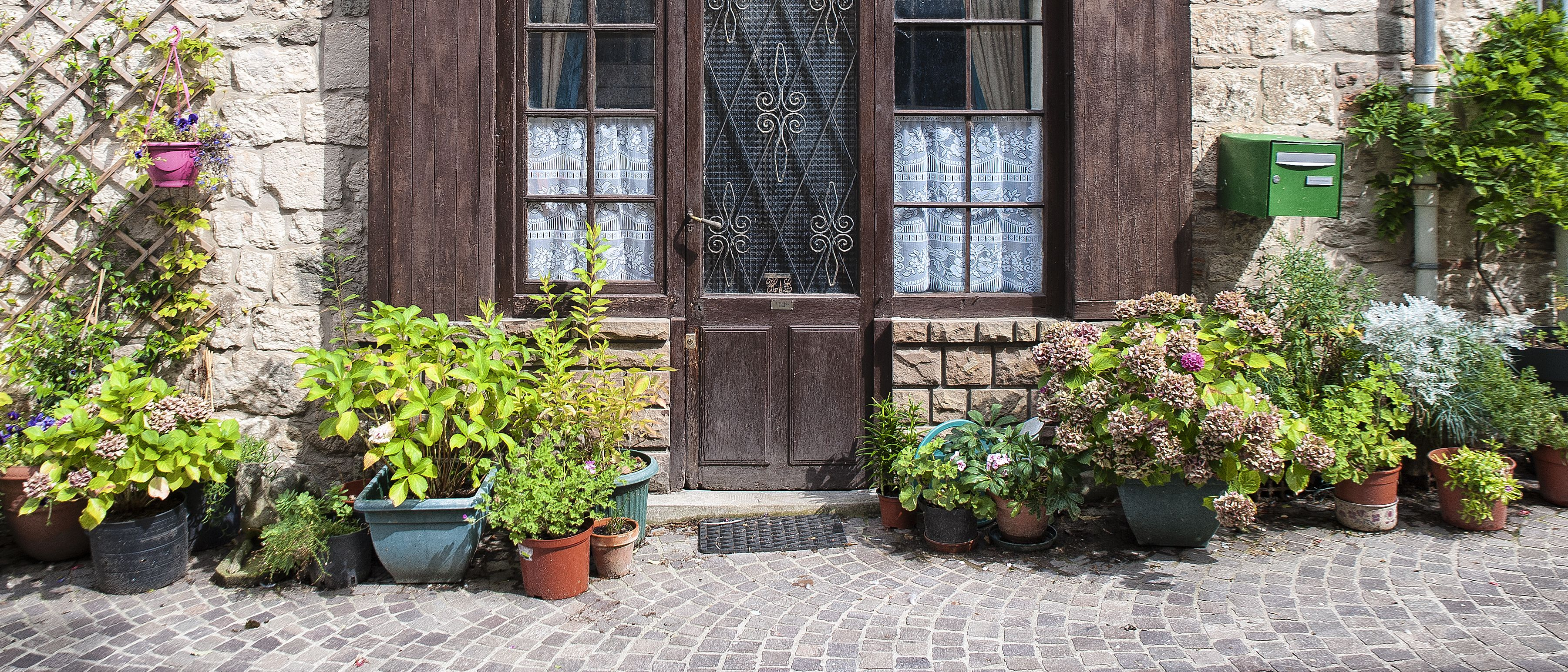 Front Door Plants You Can t Kill Potted Plants That Are Easy to Grow