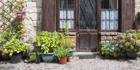 Front Door Plants You Can\'t Kill - Potted Plants That Are Easy to Grow