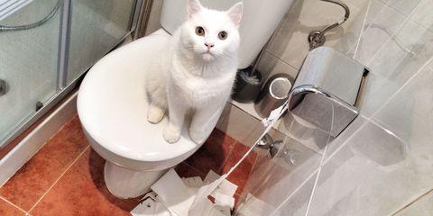 Floor, Vertebrate, Flooring, Felidae, Carnivore, Small to medium-sized cats, Cat, Plumbing fixture, Tile, Whiskers,