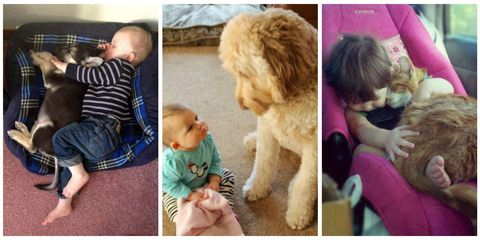 33 pets babysitting their favorite tiny humans