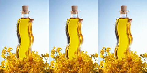 canola oil might burn belly fat