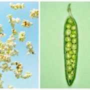 Plant, Fruit, Food, Tree, Legume, Plant pathology, Produce,