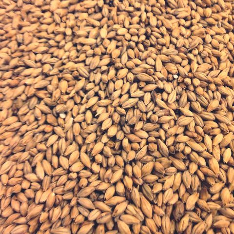 Food, Whole grain, Grain, Grass family, Plant, Food grain, Malt, Farro, Triticale, Seed,