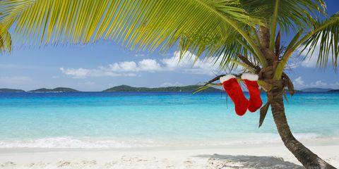Body of water, Coastal and oceanic landforms, Shore, Ocean, Coast, Beach, Summer, Tropics, Arecales, Woody plant,