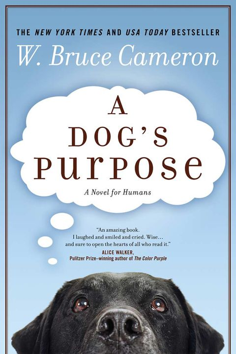 Dog breed, Dog, Carnivore, Vertebrate, Snout, Iris, Working animal, Poster, Terrestrial animal, Companion dog,
