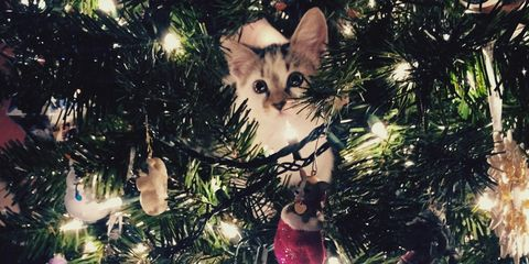 cat in christmas tree - When To Take Christmas Tree Down
