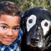 Vertebrate, Dog breed, Dog, Canidae, Nose, Snout, Carnivore, Sporting Group, Companion dog, Labrador retriever,