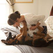 Comfort, Dog breed, Dog, Carnivore, Interior design, Room, Linens, Bed, Companion dog, Fawn,