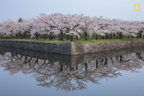 "<p>""<a href=""http://www.elledecor.com/life-culture/fun-at-home/g2987/cherry-blossom-photos/"" target=""_blank"">Cherry blossoms</a> reflected in perfect condition."" –photographer <a href=""http://yourshot.nationalgeographic.com/profile/261526/"" target=""_blank"" data-tracking-id=""recirc-text-link"">Hiroshi Tanita</a><a href=""http://yourshot.nationalgeographic.com/profile/261526/""></a></p>"