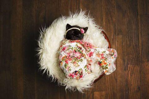 Fur, Hair accessory, Cut flowers, Stuffed toy,