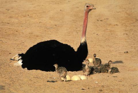 Vertebrate, Beak, Bird, Ratite, Flightless bird, Landscape, Terrestrial animal, Soil, Adaptation, Ecoregion,