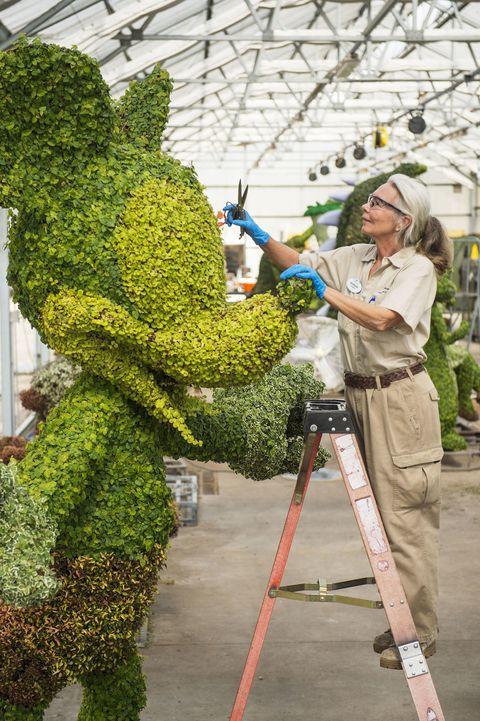 Mickey topiary