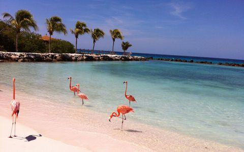 "<p>It's almost hurricane season, which means airfare and hotel prices are dropping in the Caribbean as demand disappears. ""Prices are as low as they'll be most of the year,"" says Saglie. You can find rooms at  <a href=""https://www.travelzoo.com/hotel-booking/3313/?marketType=2&searchGuid=8310f8cb-0fb2-443a-a8e0-b36eed7a1aa6"" target=""_blank"">The Hilton Aruba Carribean</a>, for example, on Travelzoo right now for $149 a night.<span class=""redactor-invisible-space""> And once you're on the desert island (that's right, it's a desert), the best activities are free: go for a swim at one of the countless white sand beaches, hike through the rocky terrain near the Natural Bridge and Pool, or grab a free bike from your hotel and explore the island — the whole thing is only 19 miles long and 6 across. </span></p><p><strong data-verified=""redactor"" data-redactor-tag=""strong"">RELATED: <a href=""http://www.redbookmag.com/life/a49683/72-hours-in-aruba/"" target=""_blank"" data-tracking-id=""recirc-text-link"">Why You Should Take a Totally Selfish Vacation</a><span class=""redactor-invisible-space""><a href=""http://www.redbookmag.com/life/a49683/72-hours-in-aruba/""></a></span></strong></p>"