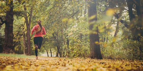 People in nature, Nature, Autumn, Tree, Natural landscape, Leaf, Green, Jogging, Trail, Woodland,