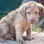 Dog, Mammal, Vertebrate, Canidae, Dog breed, Carnivore, Puppy, Sporting Group, Snout, Street dog,