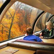 Transport, Leaf, Tree, Deciduous, Passenger, Comfort, Travel, Jacket, Autumn, Public transport,