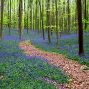 Woodland, Forest, Natural landscape, Tree, Natural environment, Nature, Nature reserve, Northern hardwood forest, Plant, Biome,