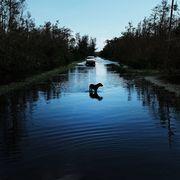 abandoned dog hurricane irma