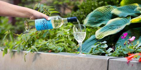 Drink, Plant, Herb, Bottle, Vegetable, Drinking water, Distilled beverage, Liqueur, Mint,