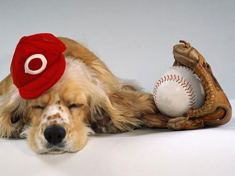 dog in baseball cap with mitt and baseball