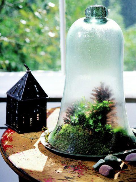 Tabletop Garden Make Your Own Indoor Garden