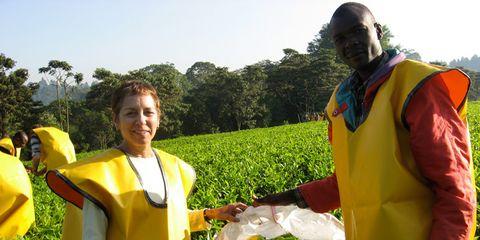 Picking Tea Leaves in Kenya