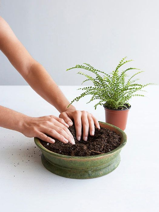 Tabletop Garden   Make Your Own Indoor Garden