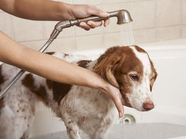 How To Give A Dog A Bath Tips For Getting Dogs Clean