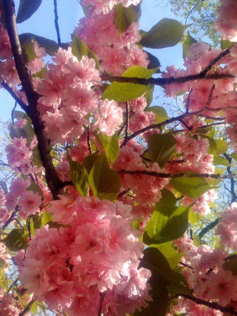 Petal, Branch, Flower, Pink, Twig, Blossom, Botany, Spring, Colorfulness, Flowering plant,