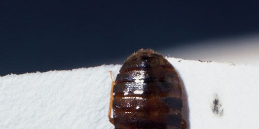 The Best Tactics To Bedbug Proof Your House