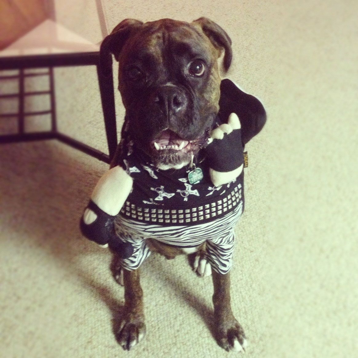 Watch 14 Pups Who Totally Owned Their Halloween Costumes video