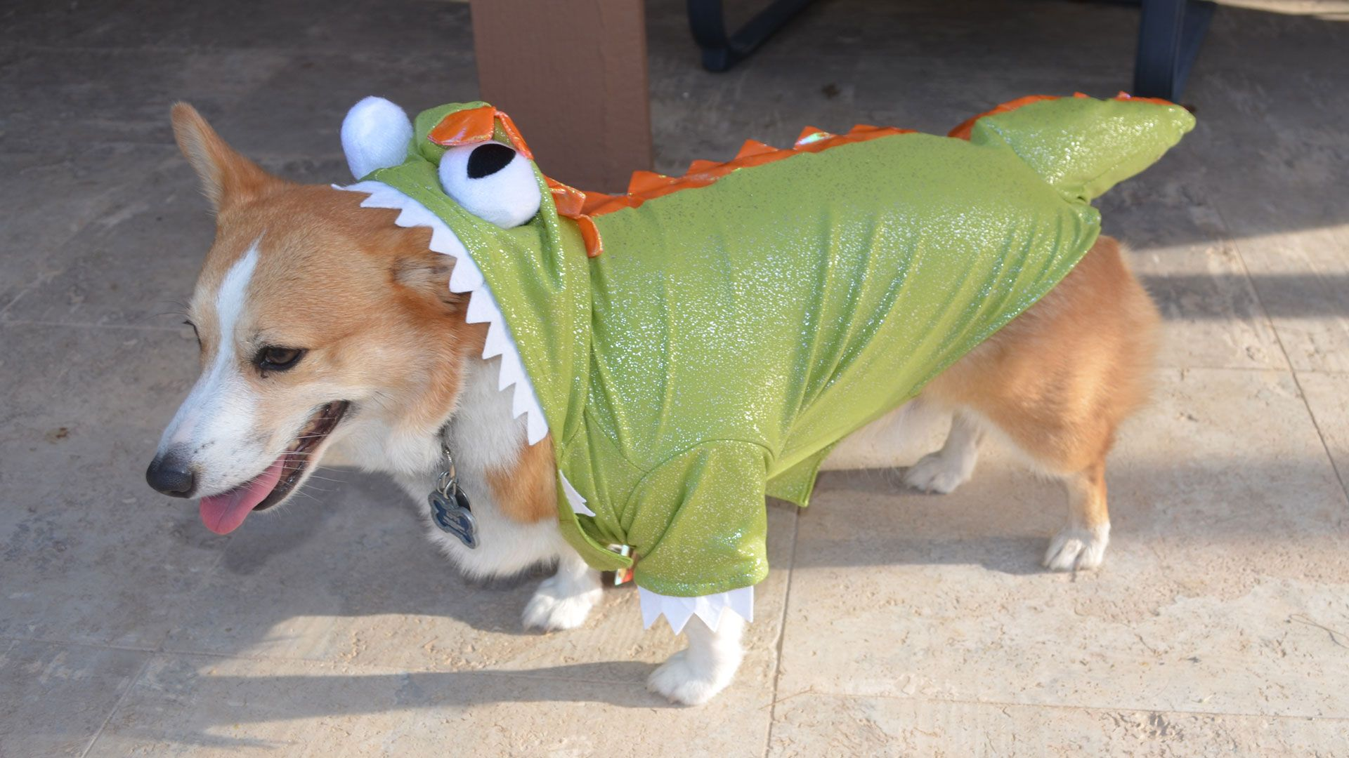 14 Pups Who Totally Owned Their Halloween Costumes advise