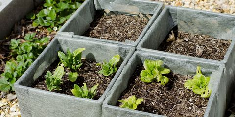 Plant the seed of a home-garden