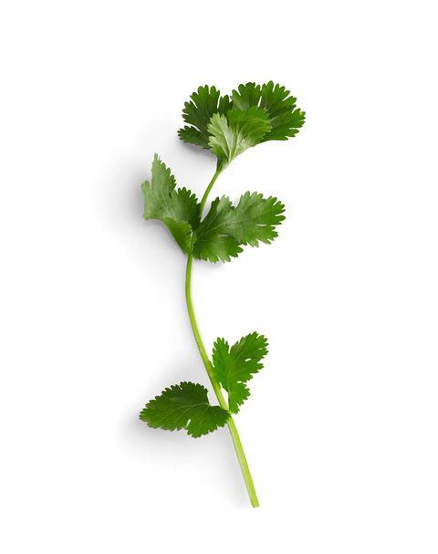 leftover cilantro recipes