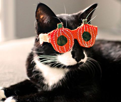 Whiskers, Vertebrate, Small to medium-sized cats, Carnivore, Felidae, Cat, Snout, Terrestrial animal, Costume accessory, Black,
