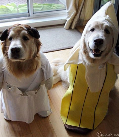 Dog in Princess Leia costume