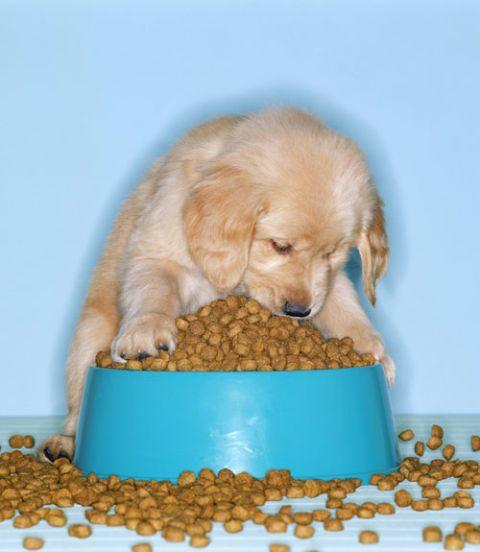dog food overflowing