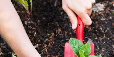 Human, Finger, Leaf, Soil, People in nature, Adaptation, Nail, Thumb, Annual plant, Coquelicot,