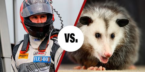 Andy Lally versus Ballast the Possum