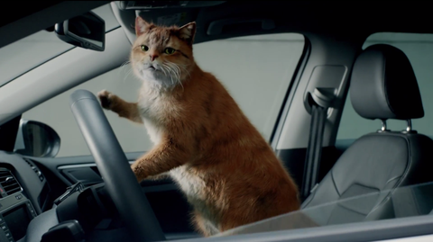 VW Leasing Cat