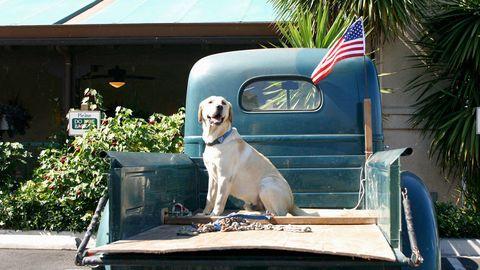 Dogs in Trucks 2