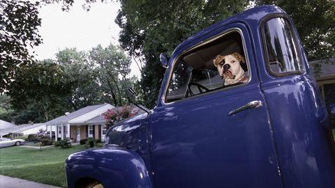 Dogs in Trucks 4
