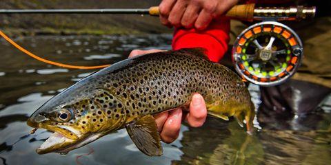 Vertebrate, Fish, Salmon-like fish, Adaptation, Watercourse, Wrist, Trout, Fisherman, Marine biology, Nail,