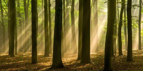 Dappled light through a woods