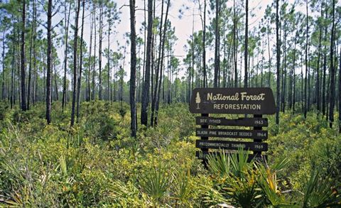 Vegetation, Natural environment, Plant, Natural landscape, Plant community, Nature reserve, Forest, Old-growth forest, Woody plant, Ecoregion,
